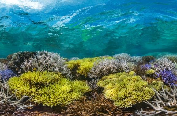 © The Ocean Agency / Richard Vevers